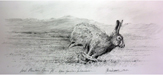 Irish Mountain Hare III