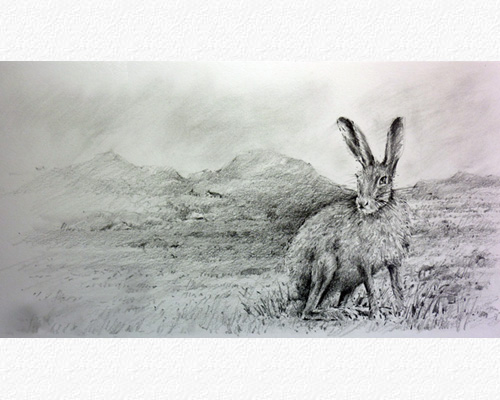Irish Mountain Hare I