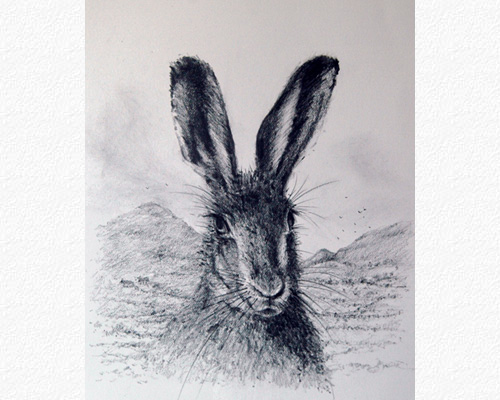 Irish Mountain Hare II