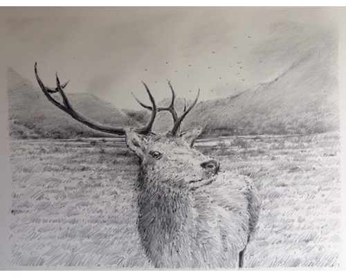Red Deer in Wicklow