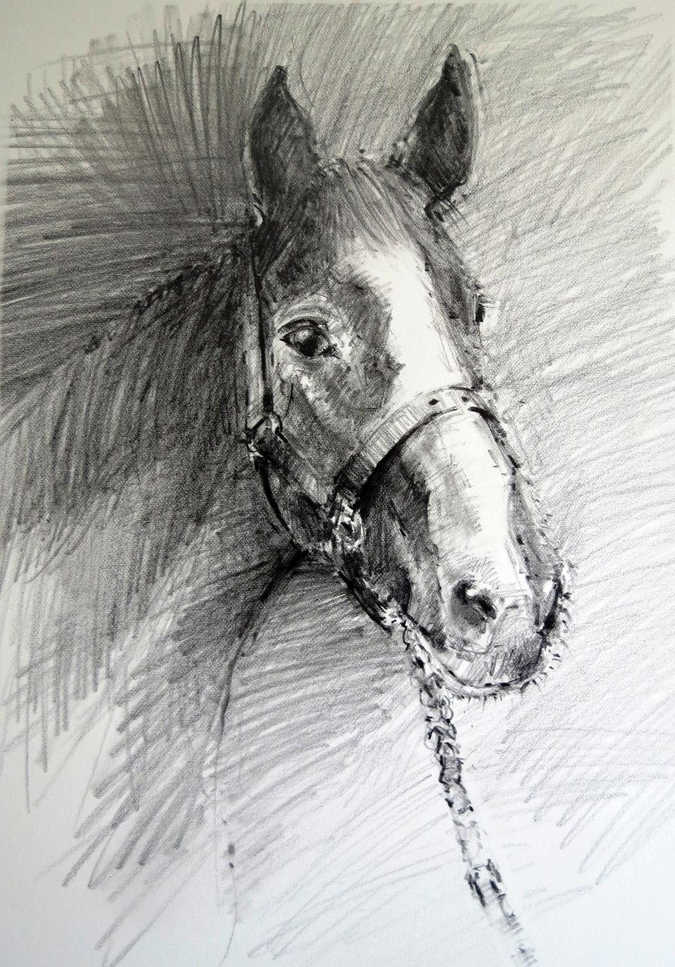 chestnut-hunter-horse