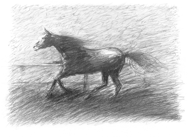 black-stallion-drawing