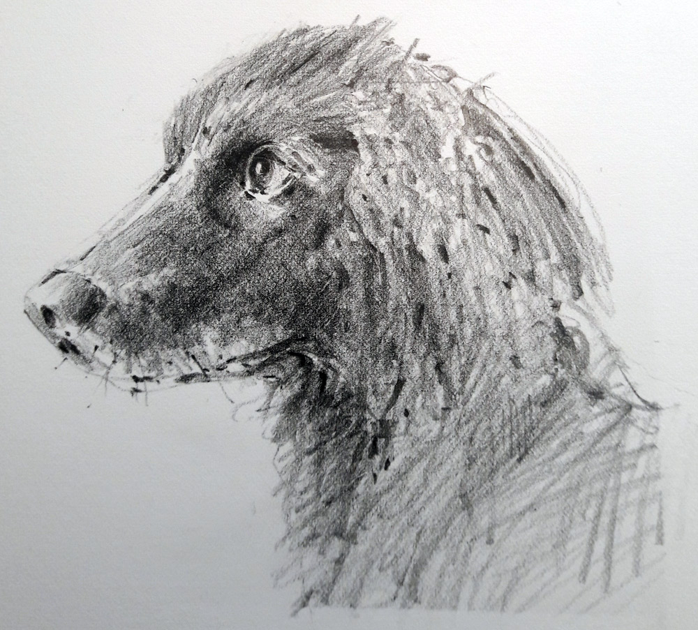 dog-drawing