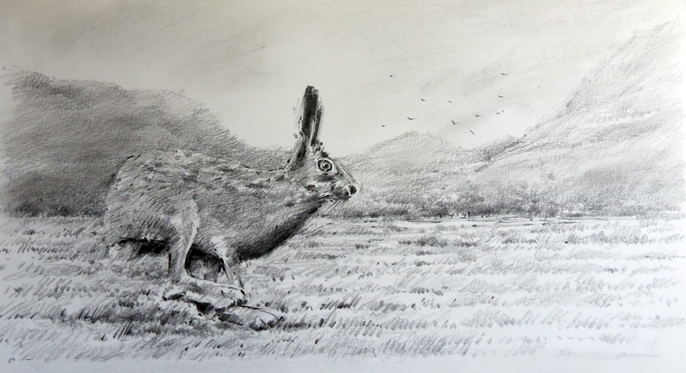 irish-mountain-hare-four