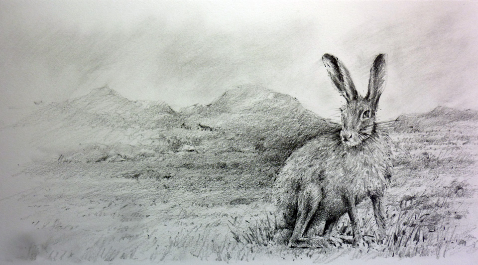 irish-mountain-hare-one