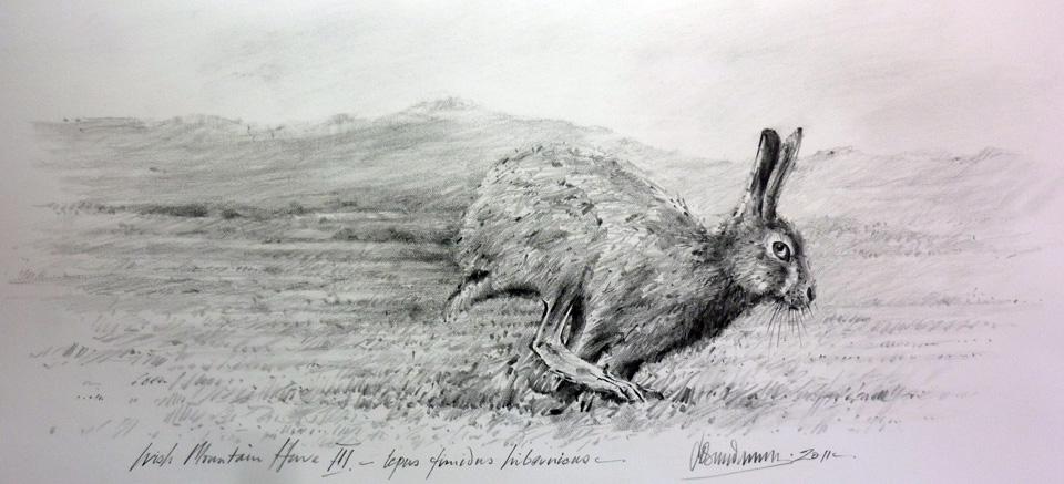 irish-mountain-hare-three